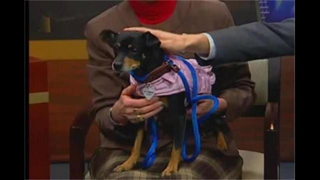 Pet of the Week: Coco and Harley