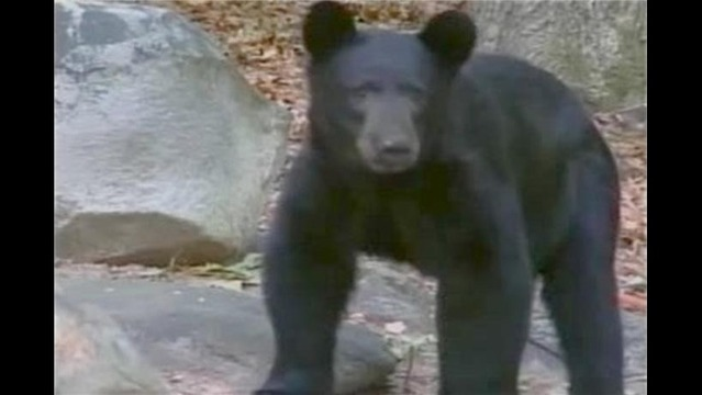 Winchester Residents Report Damage from a Bear