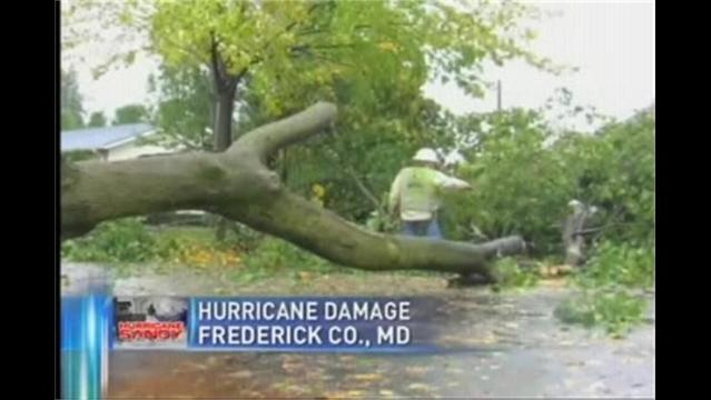 100-Year-Old Tree Toppled by Super Storm