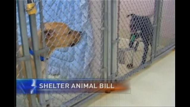 Bill Would Give Tax Credit to People Who Adopt Shelter Animals
