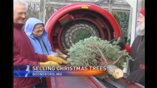 Selling Trees And Christmas Spirit in Boonsboro