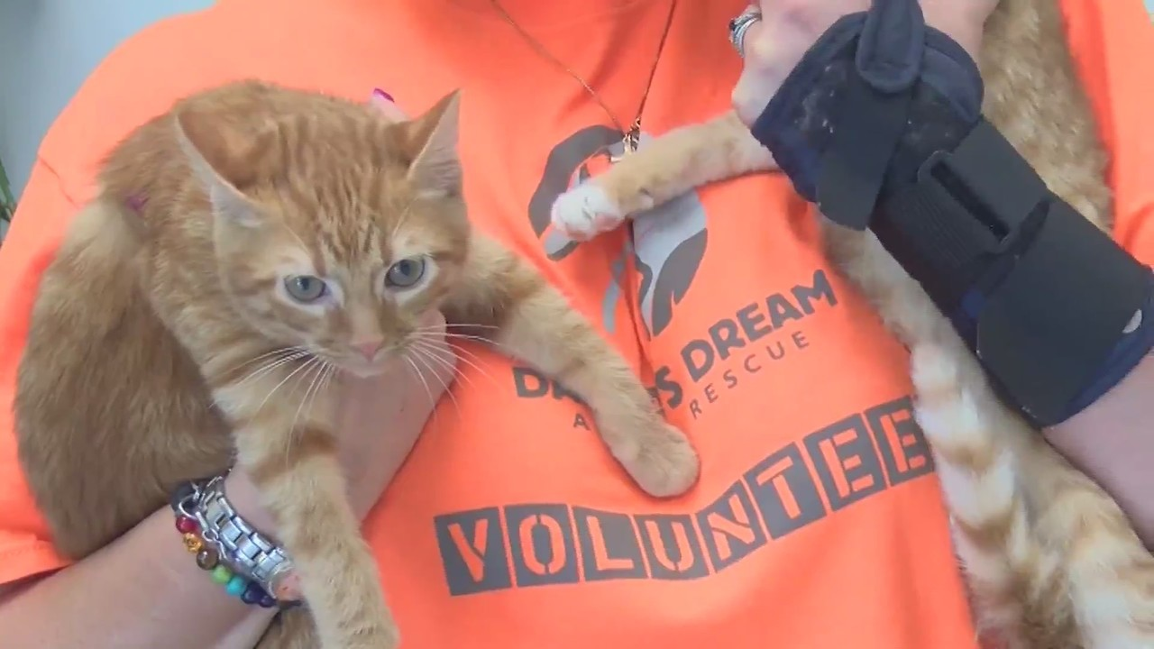Local animal rescues team up to support animal shelters impacted by Florence