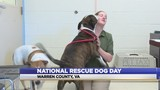 Celebrate National Rescue Dog Day